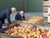 4 4-soorten appels_338x600